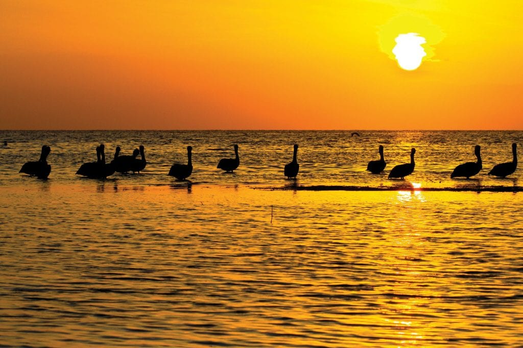 Birdwatching at sunset. COURTESY PHOTOS