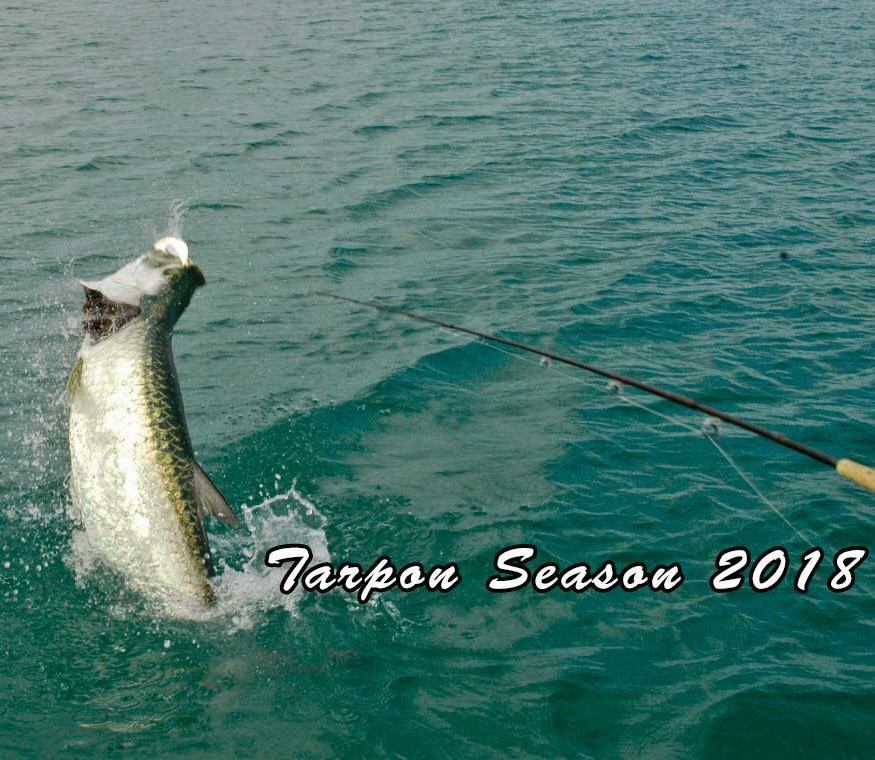 ¦ Dream Catcher Charters: It's the most wonderful time of the year! — Dreamcatcher Charters 5555 College Road, Key West 305-292-7702 http://www.dreamcatchercharters.com