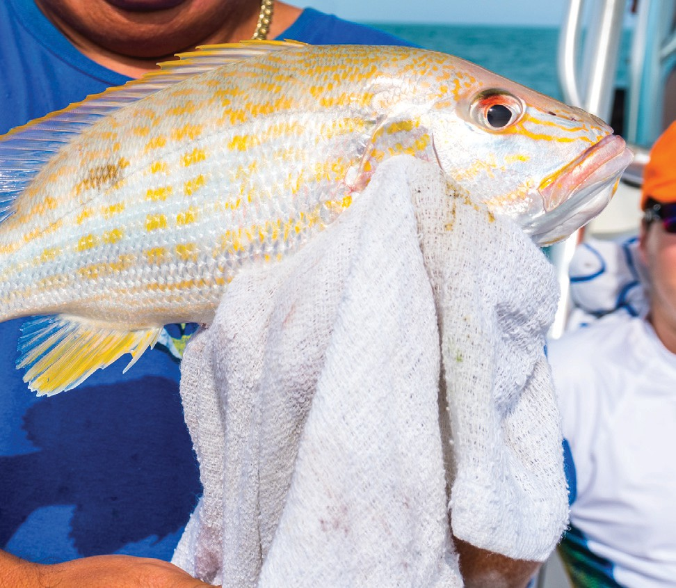 ¦ Capt. Kyle Fortney: Lane snapper for dinner after a great day of family fishing and island hopping. — Capt. Kyle Fortney 305-928-0269 FishcaptEddie.com Located at Hogfish Bar and Grill