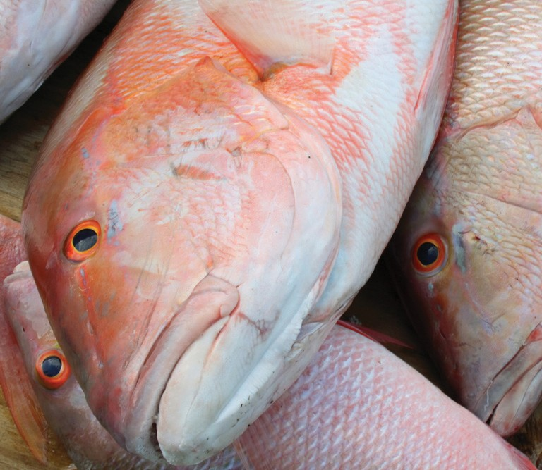 ¦ Fishbusterz Retail Seafood Market: Fresh local mutton snapper at the market for $14.99 per pound. — Fishbusterz Retail Seafood Market 6406 Maloney Ave., Key West 305-294-6456 www.keywestseafooddepot.com