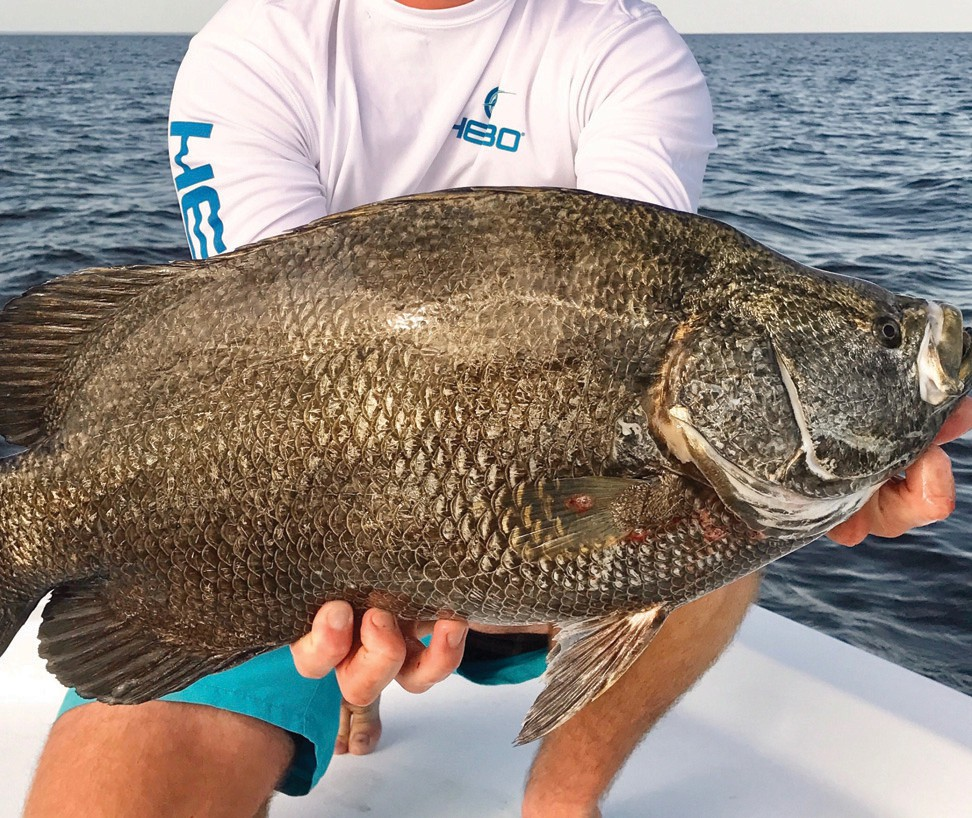 ¦ Fishbusterz Retail Seafood Market: Delicious fresh local tripletail at the market- $15.99 per pound. — Fishbusterz Retail Seafood Market 6406 Maloney Ave., Key West 305-294-6456 www.keywestseafooddepot.com