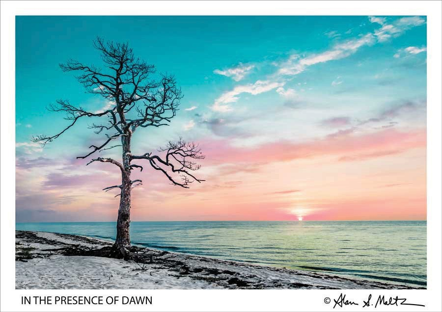 """In the Presence of Dawn"""