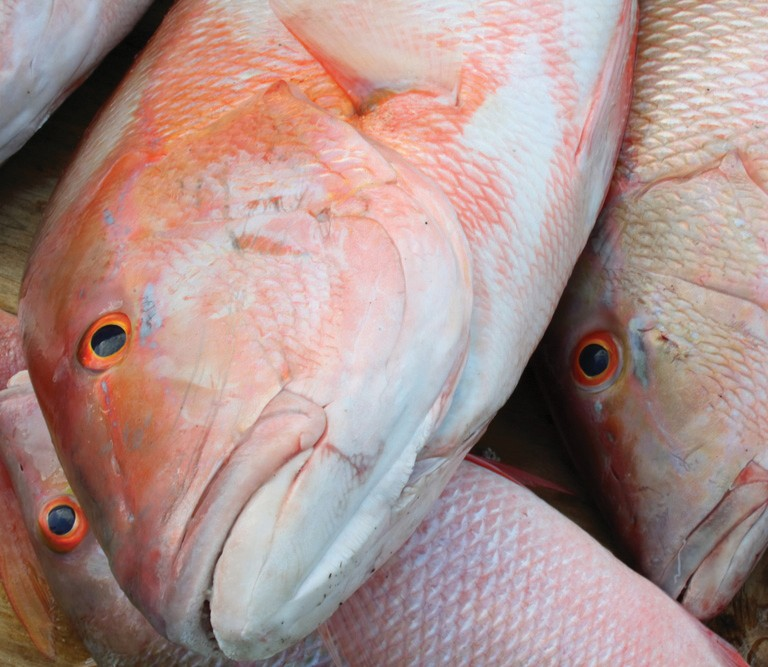 ¦ Fishbusterz Retail Seafood Market: Fresh mutton snapper at the market for $14.99 per pound. — Fishbusterz Retail Seafood Market 6406 Maloney Ave., Key West 305-294-6456 www.keywestseafooddepot.com