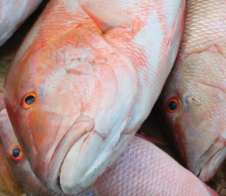 ¦ Fishbusterz Retail Seafood Market: Delicious fresh mutton snapper at our market, $13.99 per pound. — Fishbusterz Retail Seafood Market 6406 Maloney Ave., Key West 305-294-6456 www.keywestseafooddepot.com