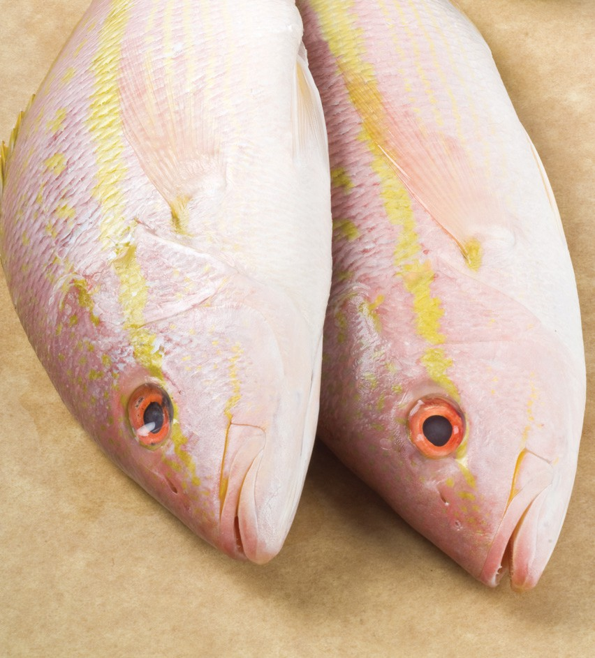 ¦ Fishbusterz Retail Seafood Market: Delicious fresh yellow tail at the market for $9.99 pound. — Fishbusterz Retail Seafood Market 6406 Maloney Ave., Key West 305-294-6456 www.keywestseafooddepot.com