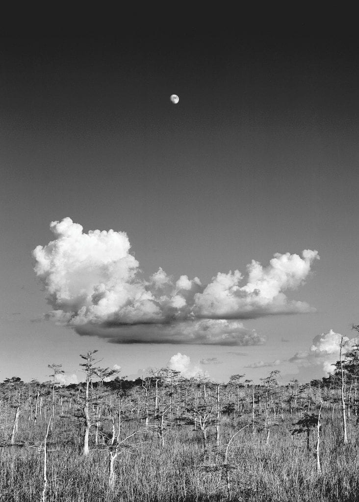 """Clyde Butcher took """"Moonrise"""" in the summer of 1986. It's the first black-and-white photograph he took in Florida. PHOTO BY CLYDE BUTCHER / COURTESY"""