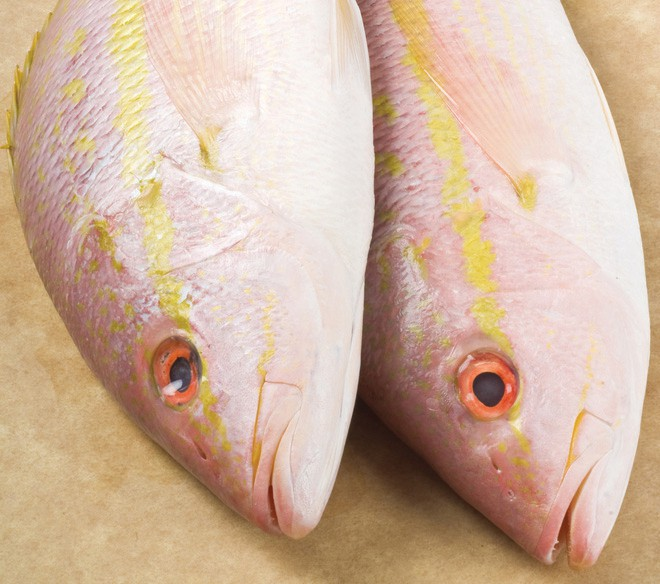 Fishbusterz Retail Seafood Market: Look what's fresh at the market. Whole yellowtail snapper $8.99 per pound. Perfect for the grill this weekend. — Fishbusterz Retail Seafood Market 6406 Maloney Ave., Key West 305-294-6456 www.keywestseafooddepot.com