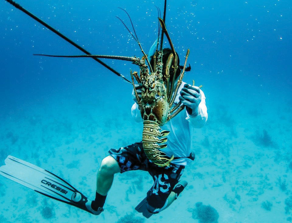 Catching lobster in the Florida Keys is easy when you're with a professional guide. COURTESY PHOTO