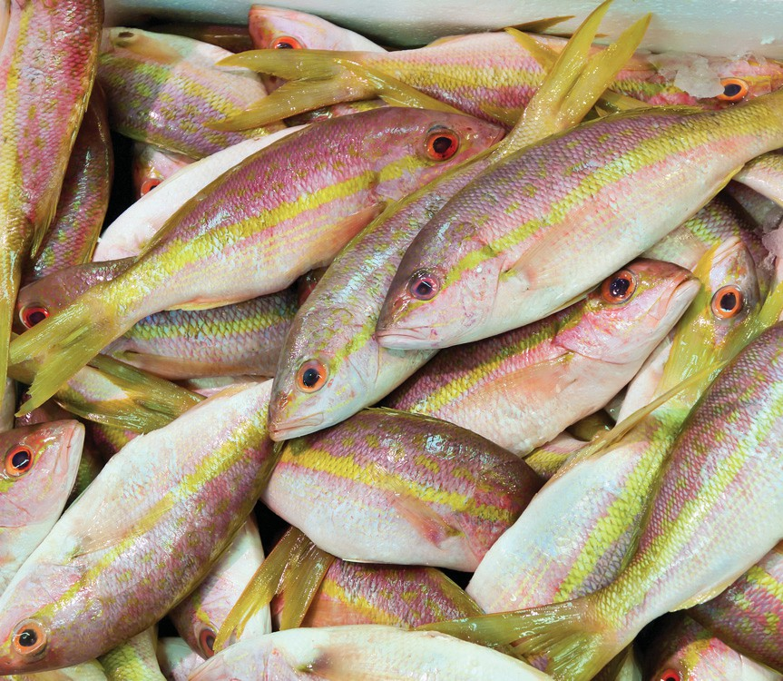 Fishbusterz Retail Seafood Market: Fresh yellowtail snapper filets at the market for 19.99 per pound. — Fishbusterz Retail Seafood Market 6406 Maloney Ave., Key West 305-294-6456 www.keywestseafooddepot.com