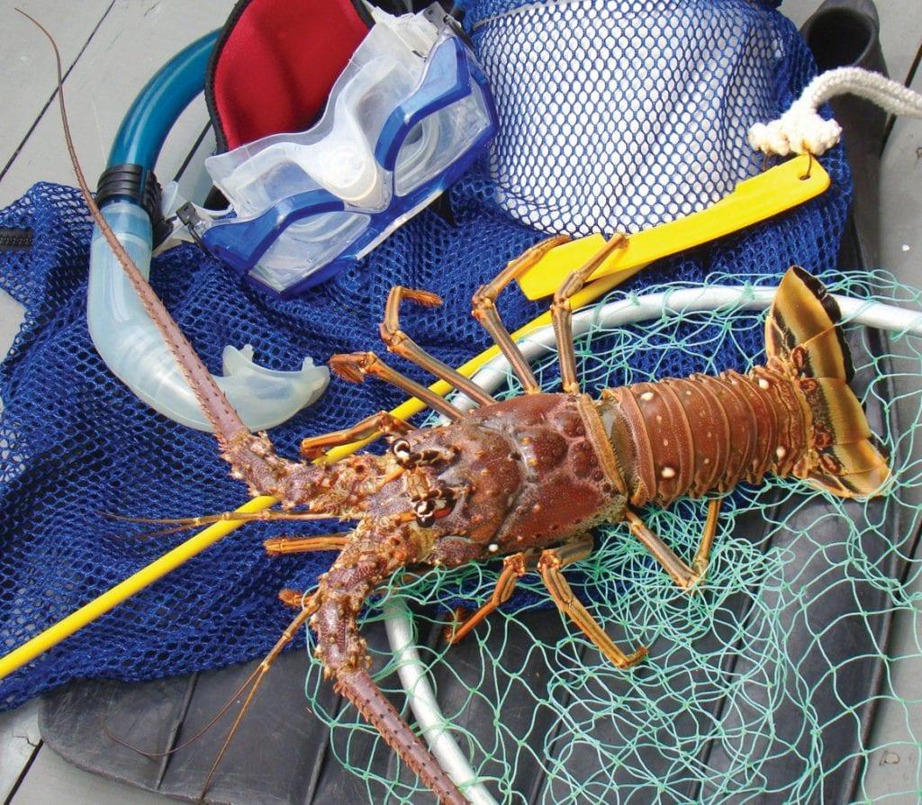 ¦ Fishbusterz Retail Seafood Market: Whole Florida spiny lobster: $10.50 per pound. — Fishbusterz Retail Seafood Market 6406 Maloney Ave., Key West 305-294-6456 www.keywestseafooddepot.com