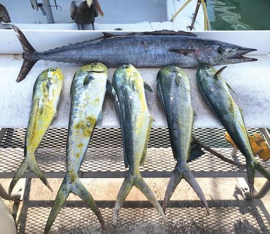 ¦ Southpaw Fishing Key West: A few blue water fish on a morning half. — Capt. Brad Simonds 5950 Peninsular Ave., Key West 305-393-2306 southpawfishingkeywest.com