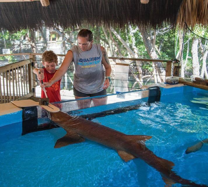 Key West Florida Aquarium - 1000+ Aquarium Ideas