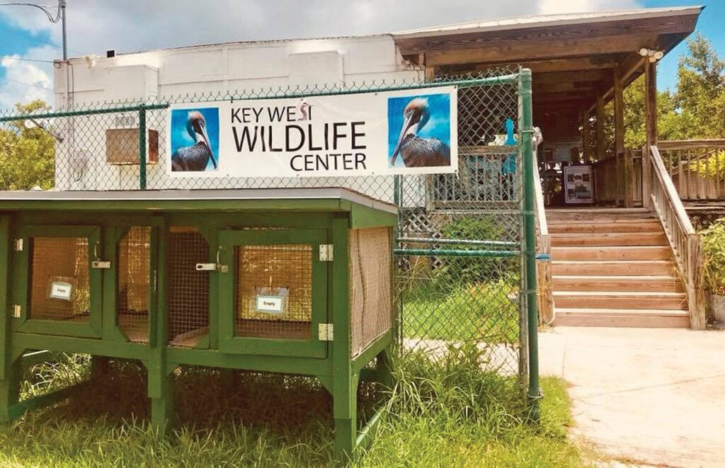 Key West Wildlife Center rescues, heals and places feral chickens in safe places. ALL PHOTOS COURTESY KEY WEST WILDLIFE CENTER