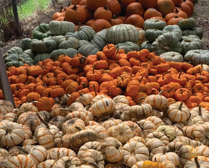The Monroe Association for ReMARCable Citizens ReMARCable Pumpkin Patch is open through Oct. 31. COURTESY PHOTO